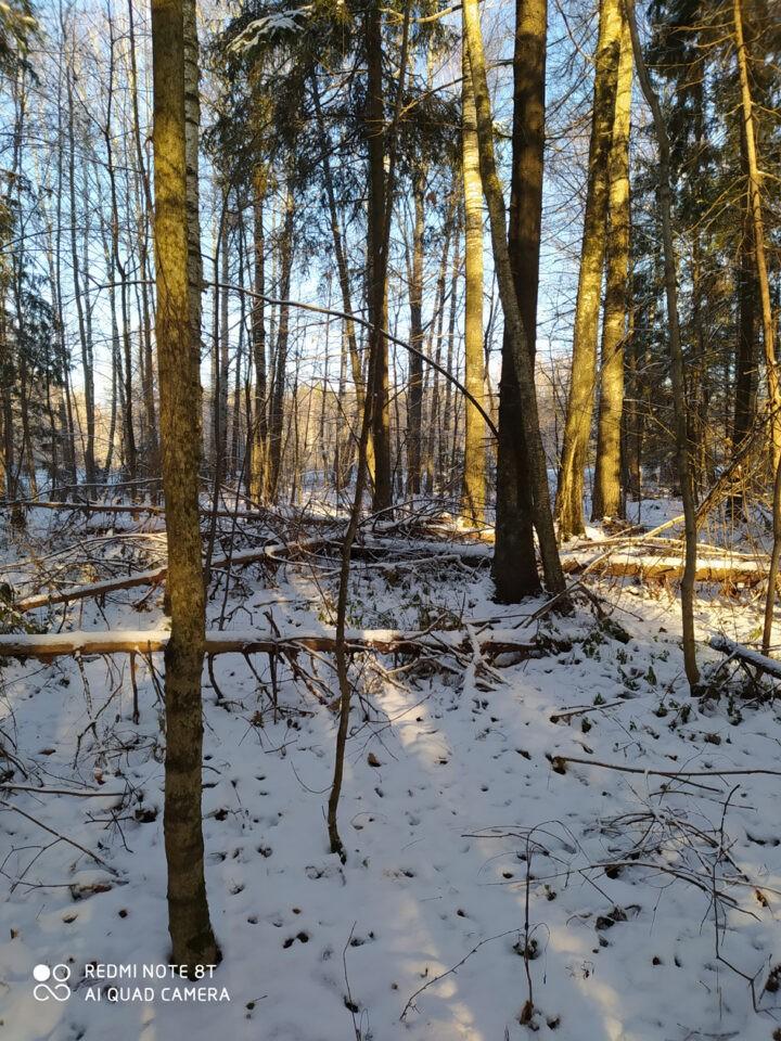 Звенигов. лес. Нурда. 73,74 кв._15 нояб 2020
